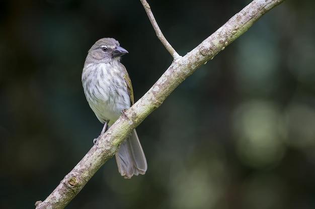 Pássaro curioso empoleirado em um galho diagonal