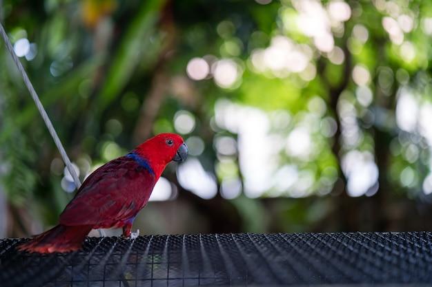 Pássaro de arara na gaiola.