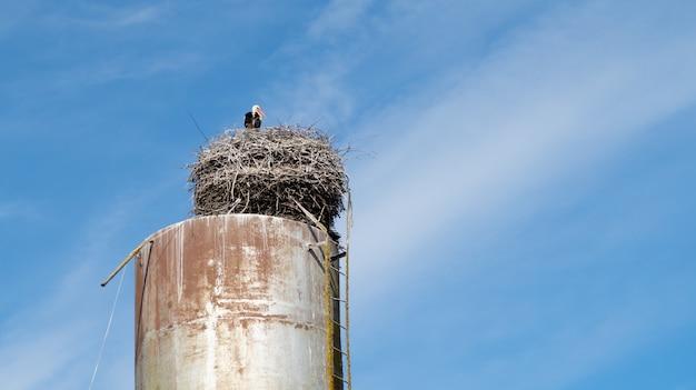 Pássaro de cegonha branca no ninho em uma torre de água em um fundo azul céu nublado