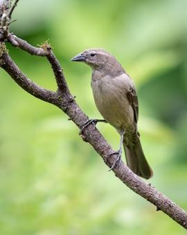 Pássaro de forma rara empoleirado em uma árvore seca olhando para a esquerda