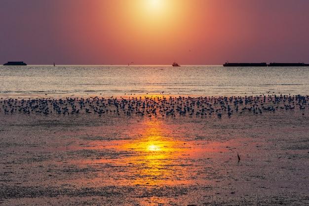 Pássaro de gaivota na praia seascape