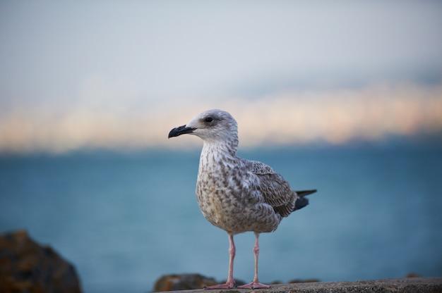 Pássaro de gaivota sentado perto da beira da água