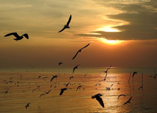 Pássaro de gaivota silhueta voando ao pôr do sol na tailândia