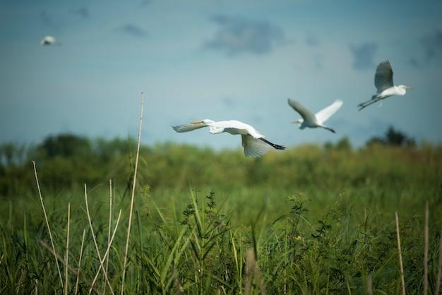 Pássaro de garça no lago
