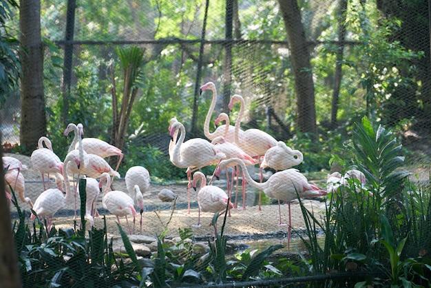 Pássaro de perna alta branca, flamingos