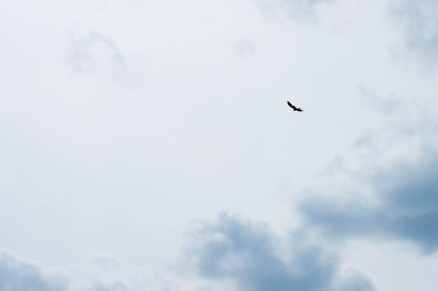 Pássaro de silhueta no céu