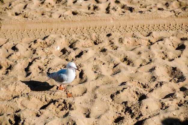 Pássaro e areia