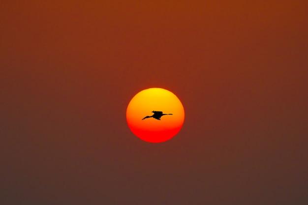 Pássaro e o sol