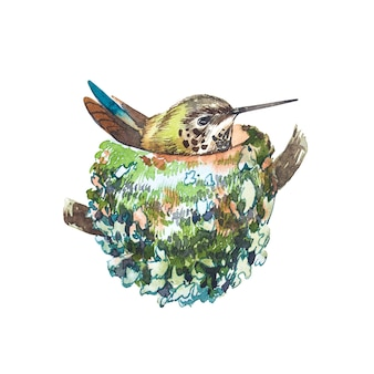 Pássaro em aquarela no ninho. mão desenhar ilustrações em aquarela sobre fundo branco. coleção de páscoa.