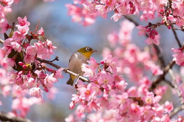 Pássaro em um galho de cerejeira