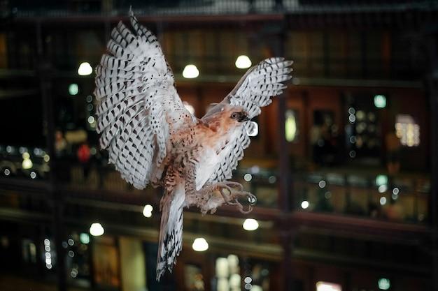 Pássaro empalhado com asas bem abertas.