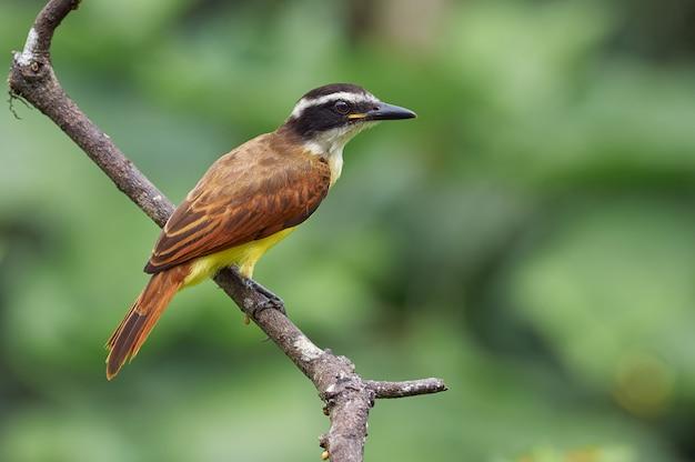 Pássaro empoleirado em um galho à procura de comida