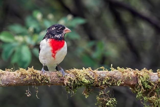 Pássaro empoleirado em um galho de árvore seca