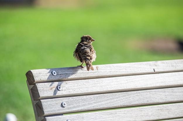 Pássaro empoleirado num banco do parque