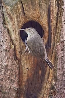 Pássaro entrando em seu ninho em uma árvore seca