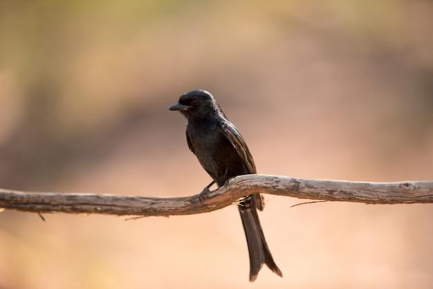 Pássaro exótico em um galho de madeira