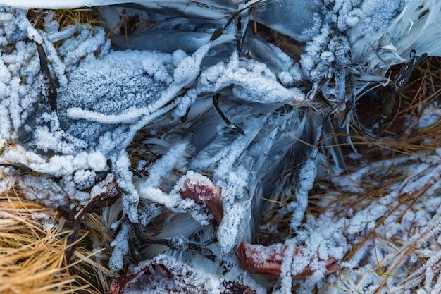 Pássaro ferido no chão coberto de neve