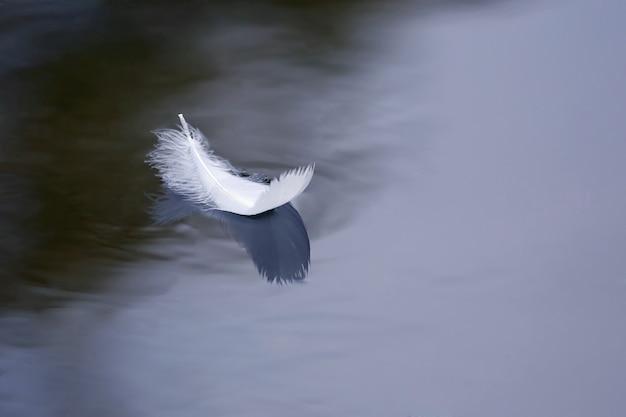 Pássaro flutua na superfície da água