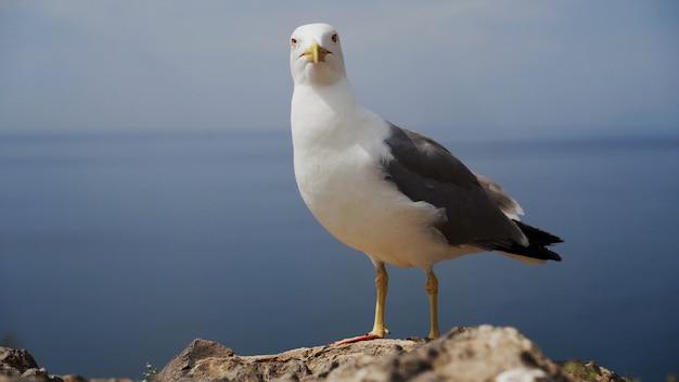Pássaro gaivota engraçado parado na praia de perto