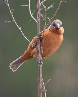 Pássaro incrível atrás de um galho em um pasto