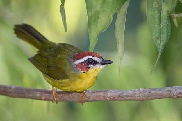 Pássaro incrível cuidadosamente parado em um galho