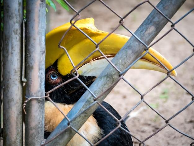 Pássaro infeliz preso em gaiola