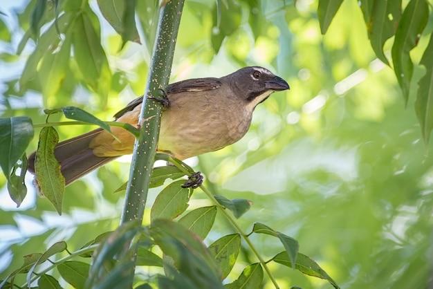 Pássaro inquieto procurando ativamente por comida entre galhos de árvores