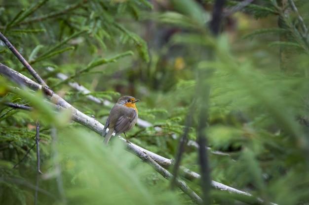 Pássaro marrom e amarelo em galho de árvore
