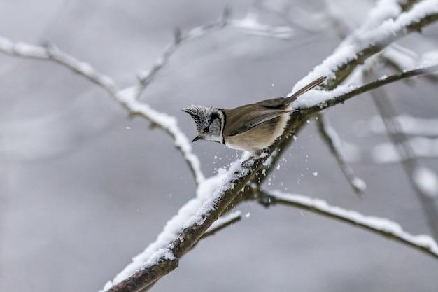 Pássaro marrom e branco em galho de árvore coberto de neve