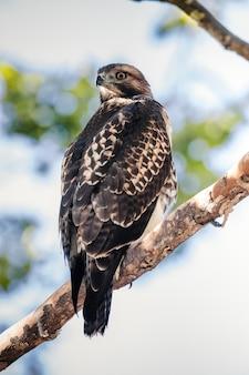 Pássaro marrom e branco em galho de árvore marrom durante o dia