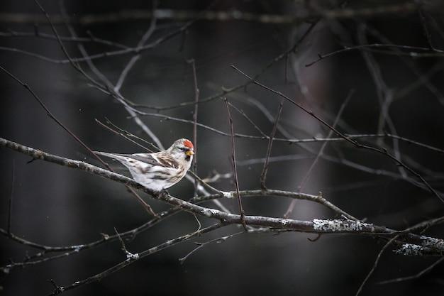 Pássaro marrom e branco em galho de árvore