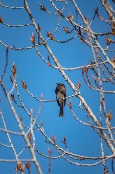 Pássaro marrom em galho de árvore marrom durante o dia