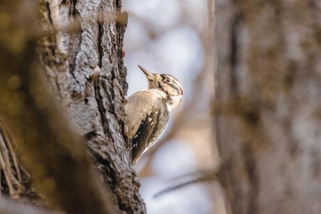 Pássaro marrom no galho de árvore marrom
