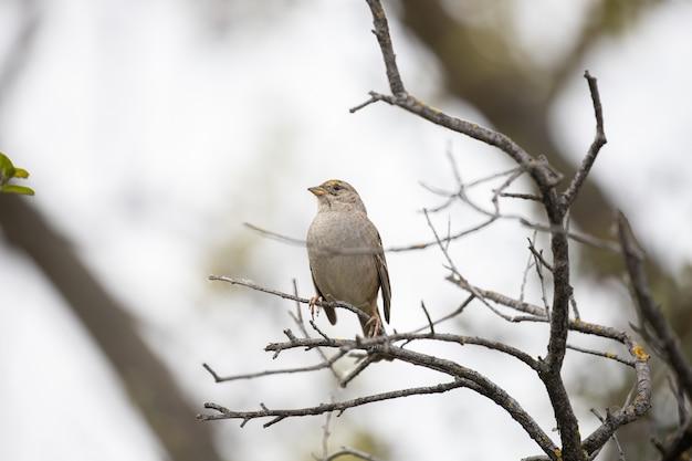 Pássaro marrom no galho de árvore