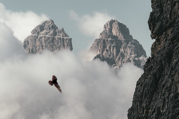 Pássaro marrom voando perto da montanha