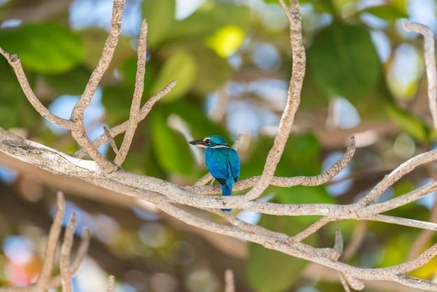 Pássaro (martim-pescador-de-colar-branco) em uma natureza selvagem