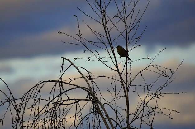 Pássaro na árvore. animal na natureza. fundo colorido natural
