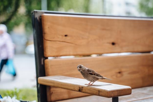 Pássaro na cidade. pardal, sentado na mesa no café ao ar livre