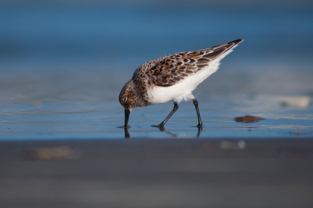 Pássaro na costa