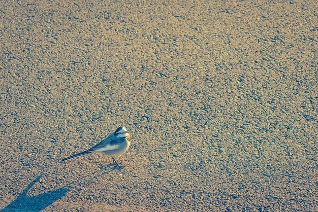 Pássaro na estrada. (imagem filtrada processados efeito vintage.)
