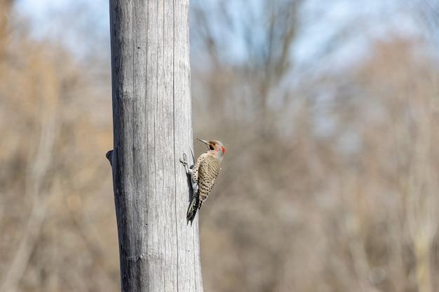 Pássaro na lateral de uma árvore