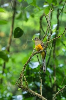Pássaro na natureza