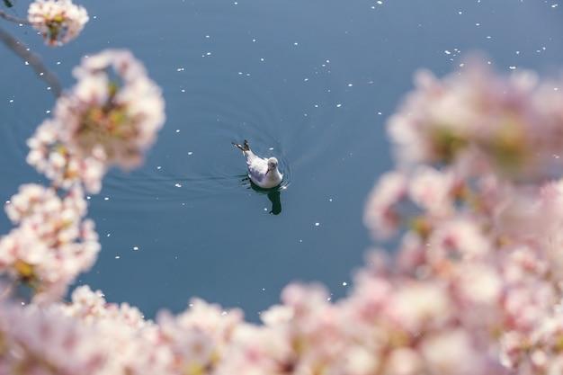 Pássaro nadando sakara rosa primeiro plano