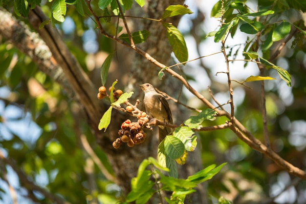 Pássaro no ramo de árvore
