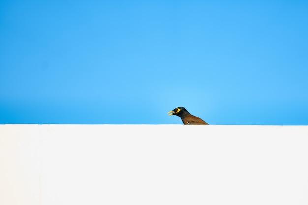 Pássaro no telhado branco ou bar no fundo do céu azul de arte