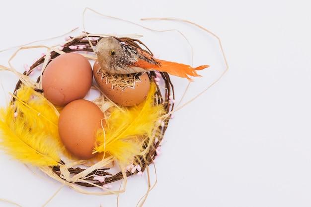 Pássaro nos ovos no ninho