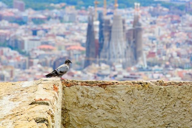 Pássaro parado na parede com a cidade