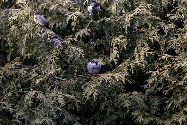 Pássaro pequeno sentado em um galho com folhas verdes