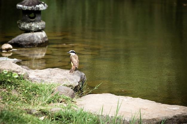 Pássaro perto do lago com fundo desfocado
