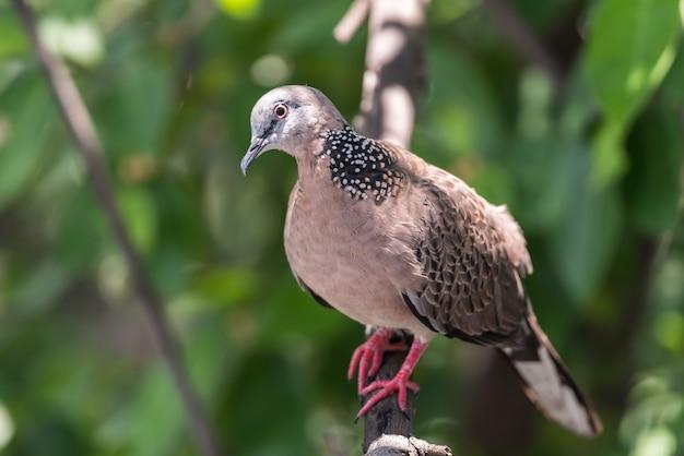Pássaro (pomba, pombo ou desambiguação) em uma natureza